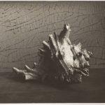 5_Zátiší s mušlí Josefa Sudka jde do aukce za 100 000 korun_1961_čb fotografie 115 x 162 mm_foto Arthouse Hejtmánek_repro zdarma
